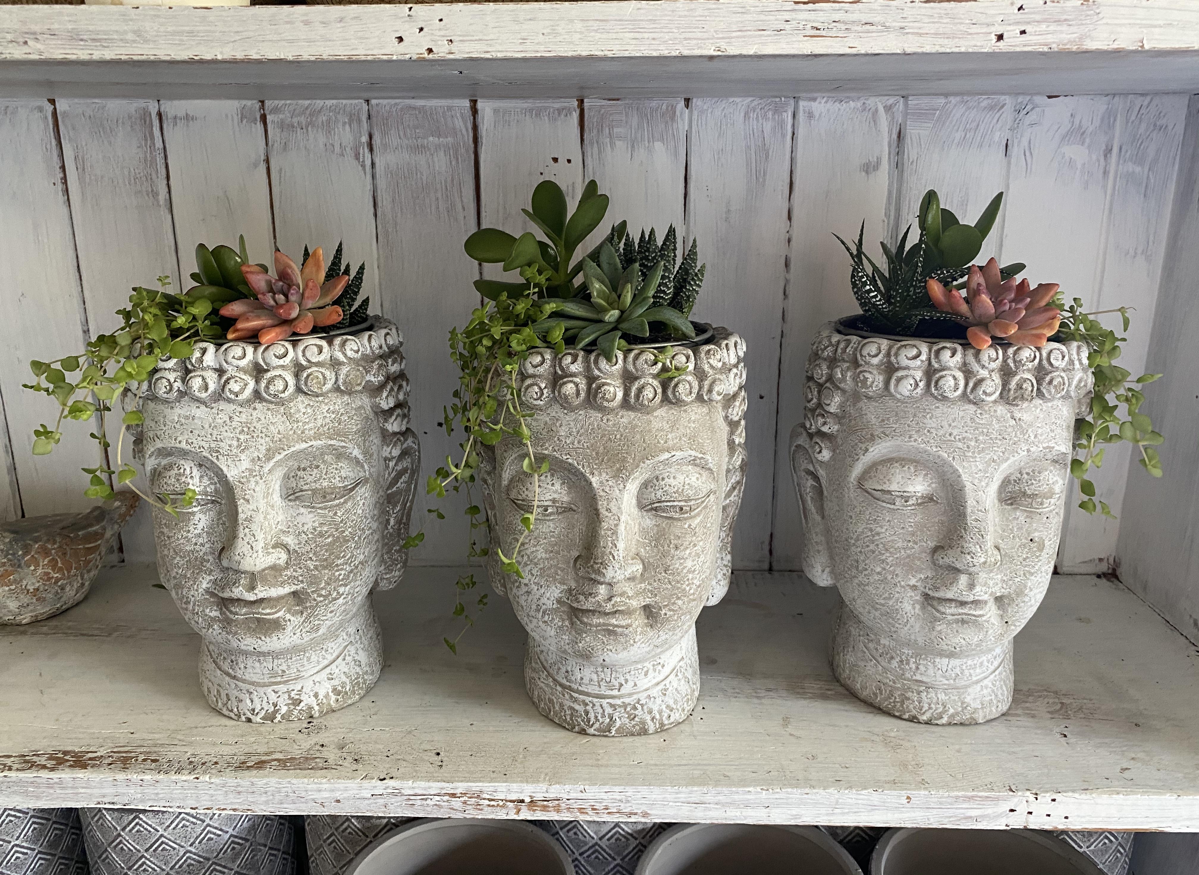 Succulent Buddha Head
