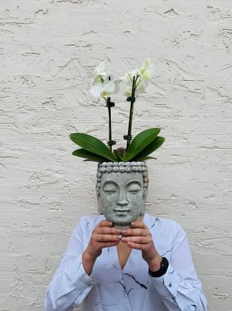 Buddha Head Orchid Pot