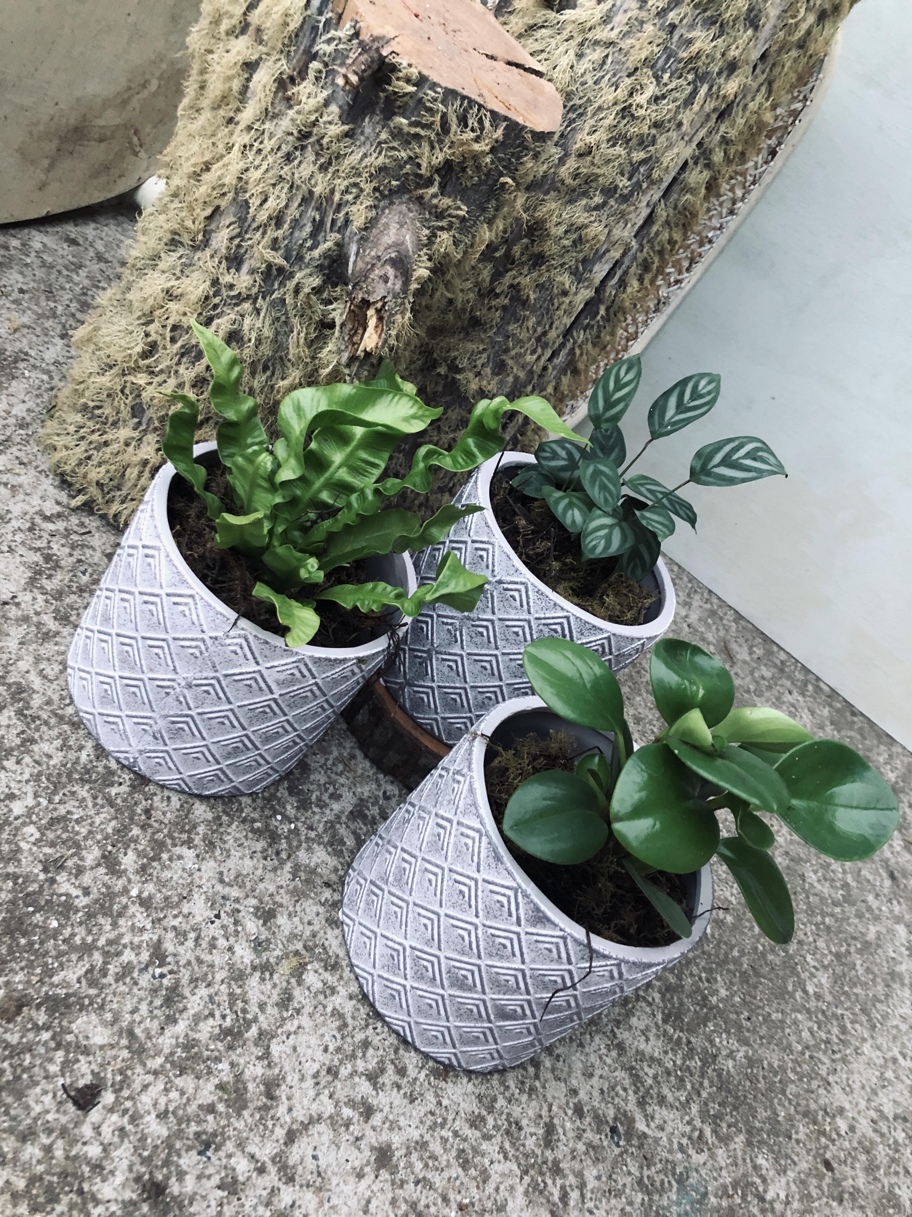 Assorted Indoor Plant